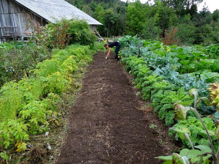 Gradina de legume.